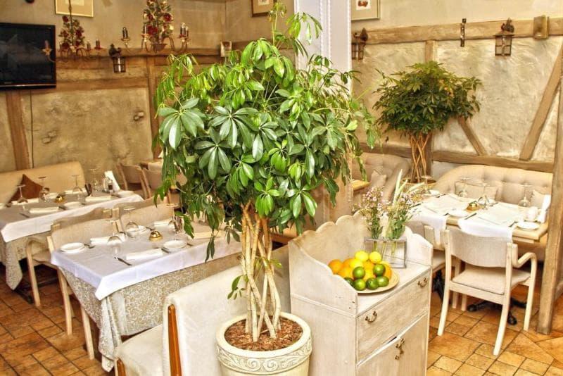 Ресторан Ришелье фото