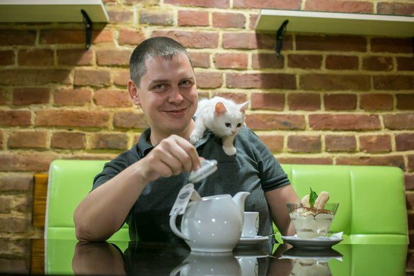 кафе с котами во Львове