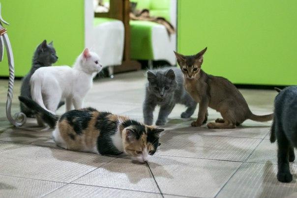 Cat Cafe Львов