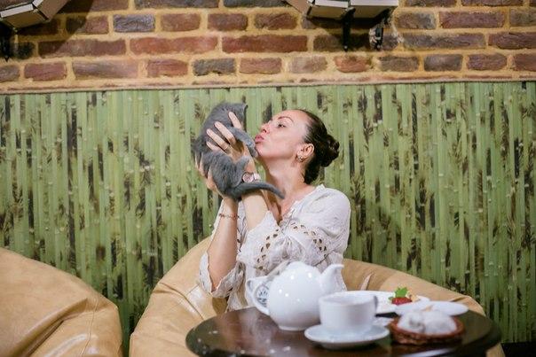 Cat Cafe Львов фото
